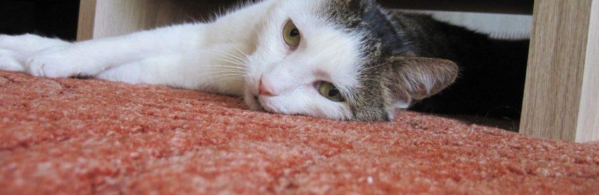 Carpet for Pets
